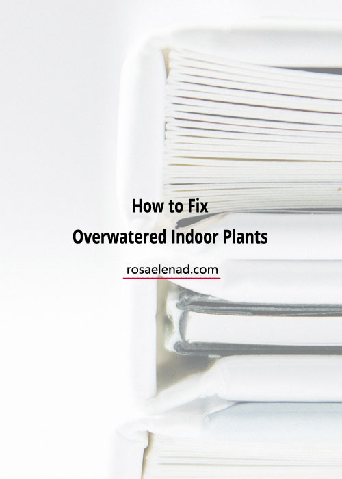 How Not to Overwater House Plants